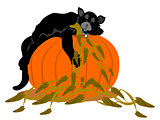 Black Cat Asleep on Large Pumpkin
