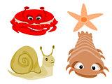 Crab Snail Starfish