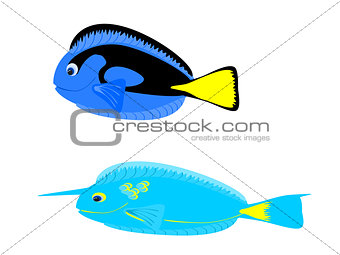 Blue and Unicorn Tang Tropical Fish