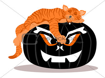 Black Halloween Pumpkin with Sleeping Cat