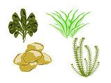 Ocean Plants Various