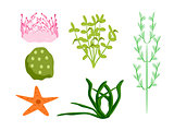 Ocean Plants and Star Fish
