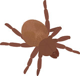 Big brown fluffy spider Tarantula isolated on white