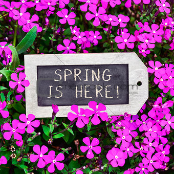 chalkboard with the text spring is here