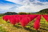 Tumble Weed and Mt. Fuji