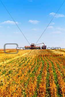 agricultural field   cleaning