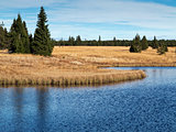 Dead pond, Ore Mountains, Czech republic