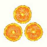 Vector watercolor orange slice circles, hand drawn doodle elements.