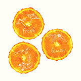 Vector watercolor orange slice circles, hand drawn doodle elements.