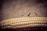 Miniature farmers at corn field. Color tone tuned.
