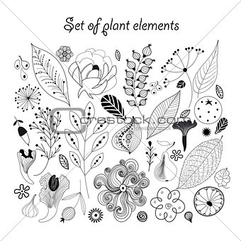 Beautiful graphic set with plants