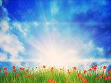 Sunny Grass Field