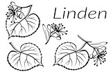 Linden Leaves Pictogram Set