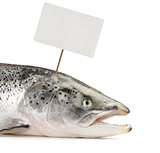 Salmon fish with price tag
