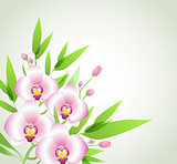 Pink orchids and green leaves