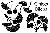 Ginkgo Biloba Leaves Pictograms