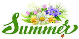 Summer lettering text. Bouquet of wild flowers chamomile, clover, bells