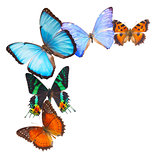 Multicolored  butterflis frame