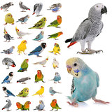 group of parakeets and parrots