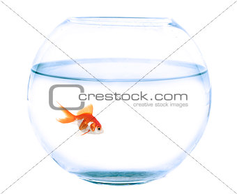 fishbowl and goldfish in studio