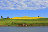 Canola Hills and Grazing Pastures