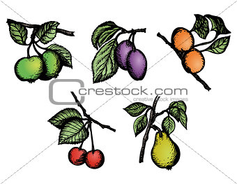 Sketch Fruit vector pack