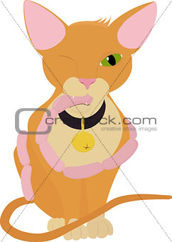 Cat with sausages, isolated orange cartoon kitty