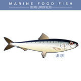Sardine. Marine Food Fish