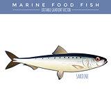 Sardine. Marine Food Fish