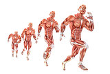 Running man anatomy. Medical illustration. Isolated. Contains clipping path