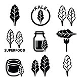 Superfood - kale leaves vector icons set