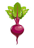 Fresh beet with leaf