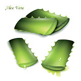 Set of cut pieces of aloe vera.