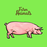 Vector illustration of pig in graphic style. Drawing by hand.