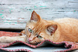 Red cat on the bench