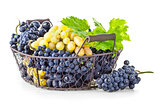 Basket blue and white grapes with green leaf