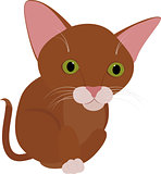 Funny brown cat with big green eyes isolated on white