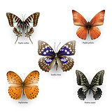 butterfly collection 02