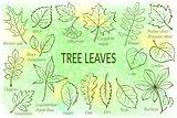Leaves of Plants Pictogram Set