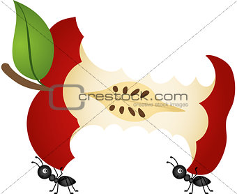 Ants carrying apple core