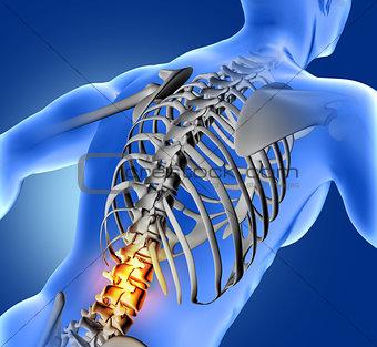 3D medical image of blue medical figure with lower spine highlig