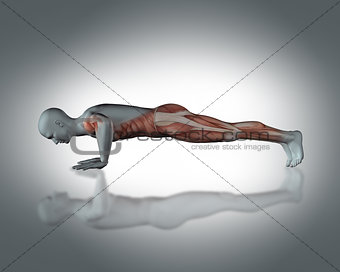 3D medical figure in push up position