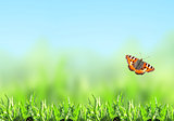Green grass and butterfly