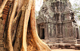 Big tree and ruins of temple in Angkor Wat complex, Siem Reap, C
