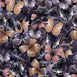 butterfly seamless 07b