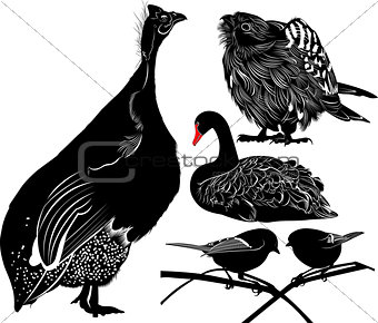 guinea fowl birds Numiba. The figure shows a bird swan. falcon silhouettes on the white background. A titmouse isolated on a white background.