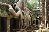 Ta Prohm Angkor temple Cambodia