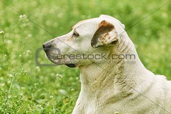 Portrait of Mongrel Dog