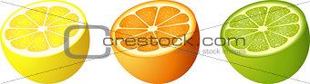 Citrus fruit cut