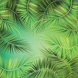 Palm tree branches on green background.